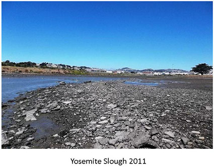 Yosemite Slough2011